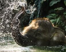 """wettbewerb """"Neue elefantenwelt"""" der wilhelma gewonnen"""